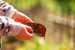 Treow Integrates Nature